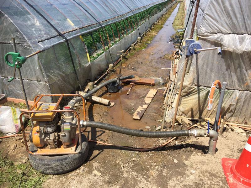 伊予郡松前町のいちご農家さん。水量は格段にアップしました。