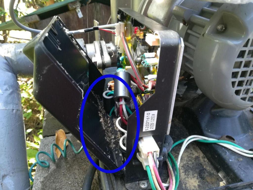 ポンプ電装箱の内部にアリの巣